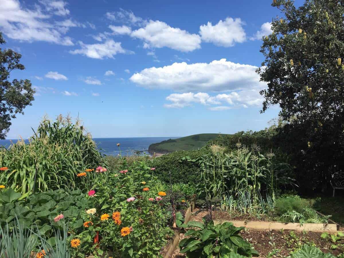 buena-vista-farms