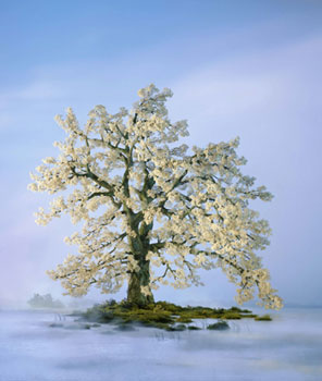Didier Massard Spring Tree Photo