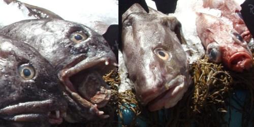 ag-fair-fish-