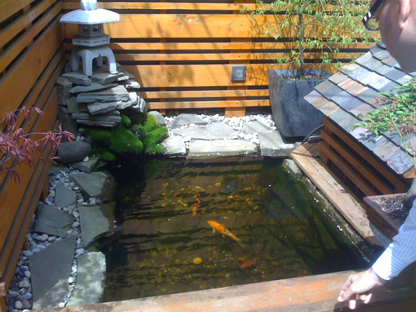 Design diary a japanese garden in boston stylecarrot for Japanese koi pond garden design