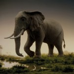 ARTmonday:Elephants in Art