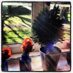 Sunday Bouquet: Mini Tree, Streaming Sunlight