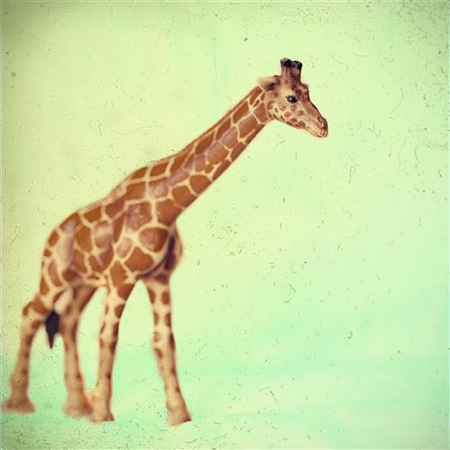 Ina-Christensen-giraffe-photo