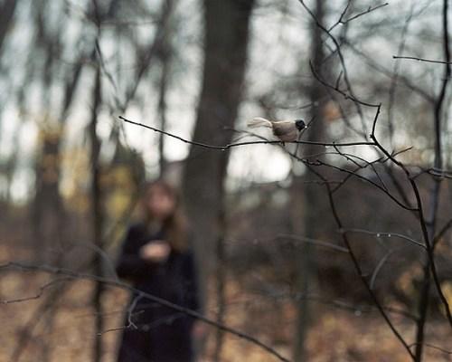 Anastasia-Caabon-bird-woods
