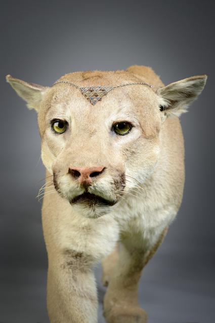 amy-shutt-lion-tiara