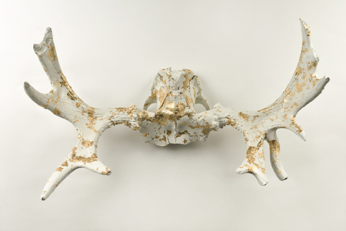 gold-dusted-moose-antlers