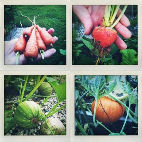sharon-kitchens-vegetables