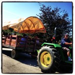Foodie Friday Apple Picking at Smolak Farms