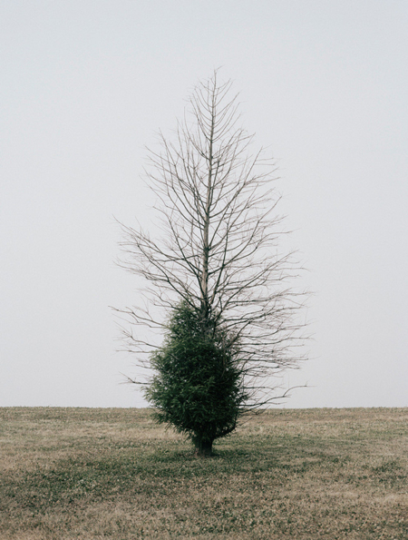 daniel-seung-lee-belmont-harbor-tree-ii-chicago