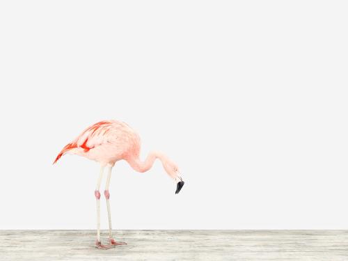 Montrose_Sharon_Flamingo-No.4_1000_1024x1024