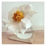 Sunday Bouquet: White Peony in Glass Vase