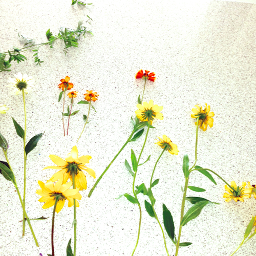 Flowers Spread Out On Caesarstone Countertop
