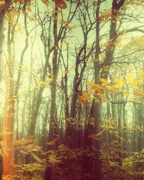 Landscape Photo Of Hazy Autumn Woods