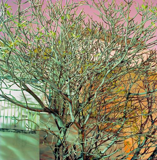 cityscape-green-Branches