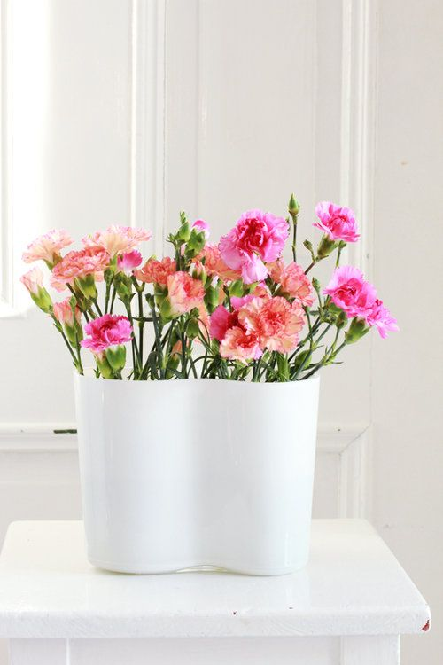 Sunday Bouquet Colorful Carnations In Alvar Aalto Vase