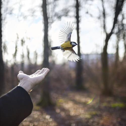 cig-harvey-the-goldfinch