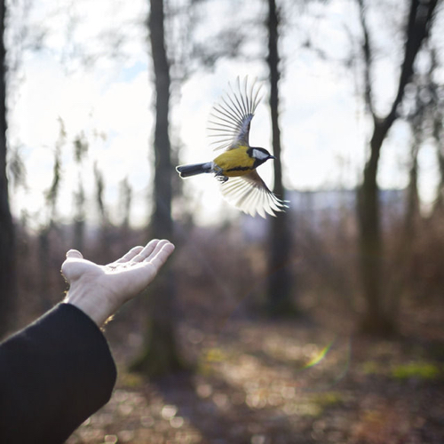 dig-harvey-the-goldfinch