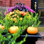 Sunday Bouquet: Fall Floral Arrangement on Marlborough