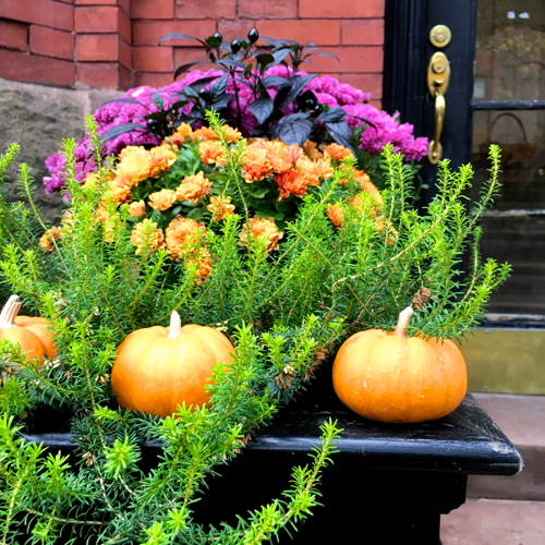 Fall Floral Arrangement Outdoors In Boston