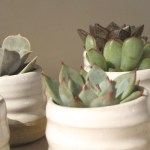 Sunday Bouquet: Succulents and Farmhouse Pottery