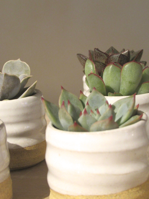 Succulents In Pots By Vermont Based Farmhouse Pottery