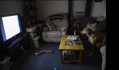 Interior Photograph With Dog By Michelle Rearic
