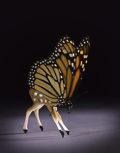 Fawn With Butterfly Head By Abby Goodman Spring Art