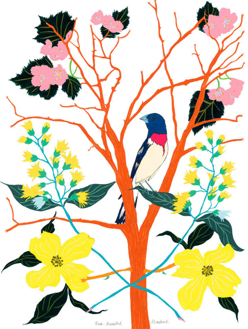 Branch and Bird Illustration By Artist Amy Jean Porter At 20x200