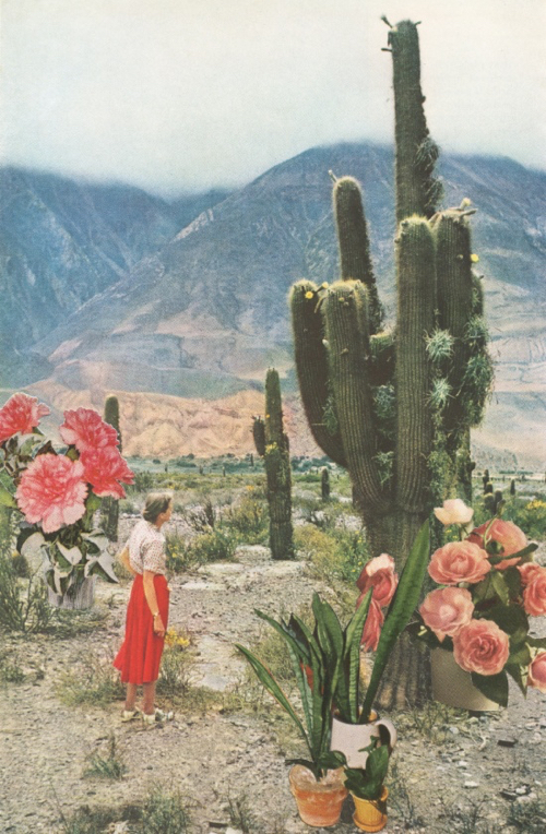 Spring Cactus Blooms In The Desert By Sarah Eisenlohr