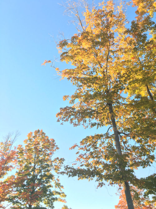 Fall Foliage In Central Massachusetts