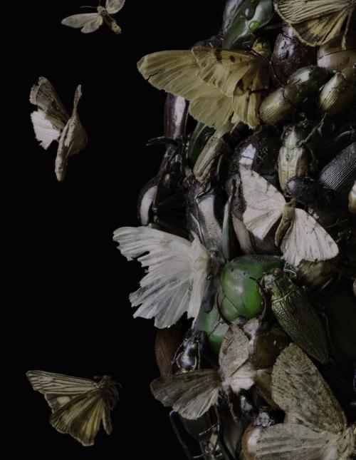 Boston Artist Tara Sellios Insect Photographs