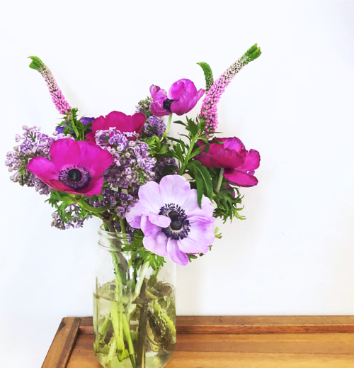 Spring Flowers Purple Anemones