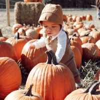 Fall Festivities: Pumpkin Patches & Harvest Style
