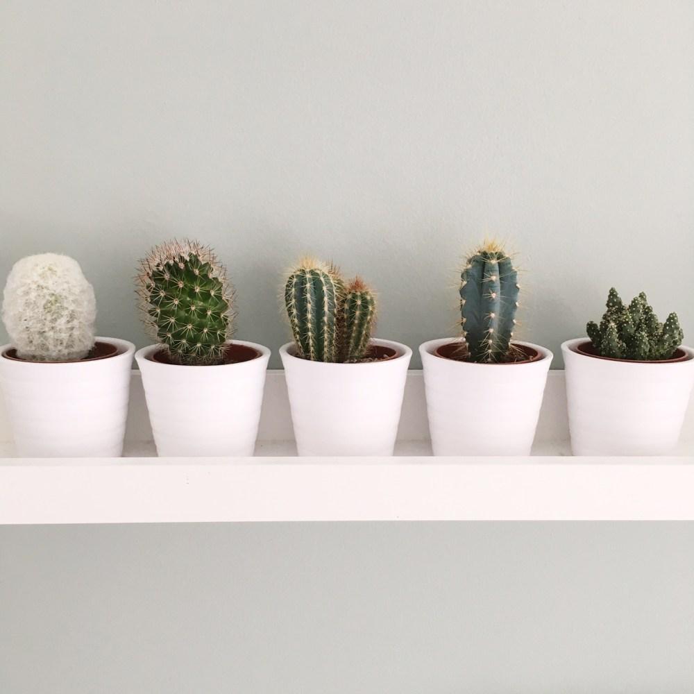 cactussen fotorichel