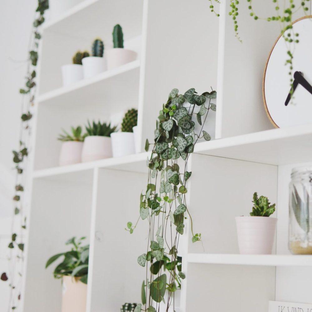 letterbak chinees lantaarnplantje