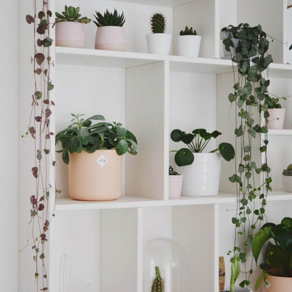 letterbak lantaarnplantjes