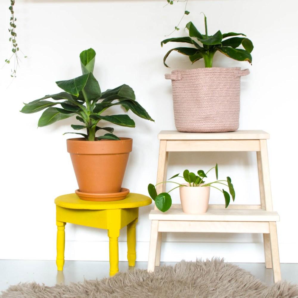 Bananenplanten