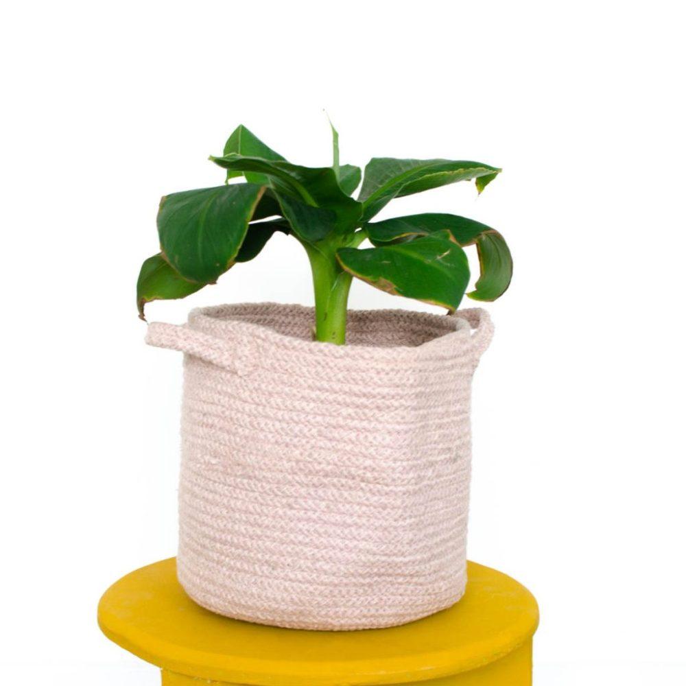 bananenplant roze mand