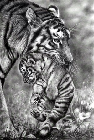 easy pencil drawings realistic animals