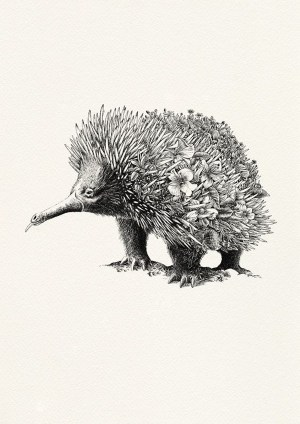 pencil animals drawings realistic easy simple