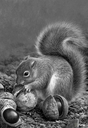 drawings realistic pencil coloring animals easy animal adults volwassenen kleuren voor adult grayscale squirrel colouring charcoal sketches drawing amazing wildlife