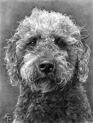 realistic pencil easy drawings animals