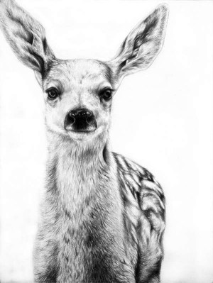 easy animals pencil realistic drawings