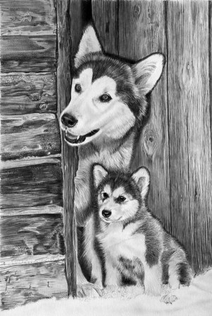 realistic easy animals pencil drawings