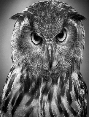 realistic animals drawings easy pencil
