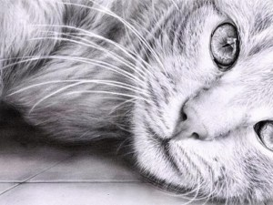 realistic easy drawings animals pencil