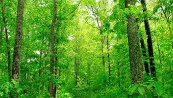 deep-woods-feat.jpg.560x0_q80_crop-smart