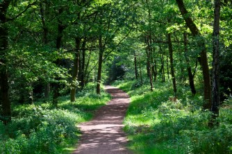 Greno Woods (CREDIT Paul Hobson) small
