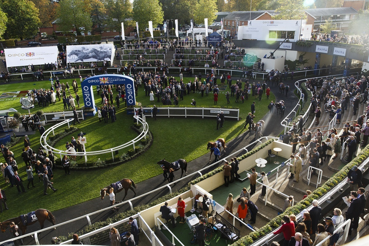 ASCOT, ENGLAND - OCTOBER 18: General views at BQIPCO British Champions Day 2014 at Ascot Racecourse on October 18, 2014 in Ascot, England. (Photo by Tristan Fewings/Getty Images for Ascot Racecourse)