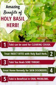 Amazing-benefits-of-holy-basil-or-tulsi